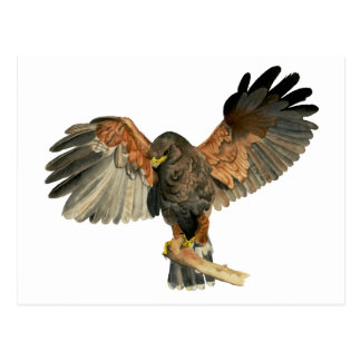 Hawk Flapping Wings Watercolor Painting Postcard