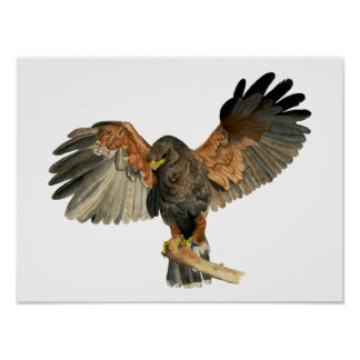 Hawk Flapping Wings Watercolor Painting Poster