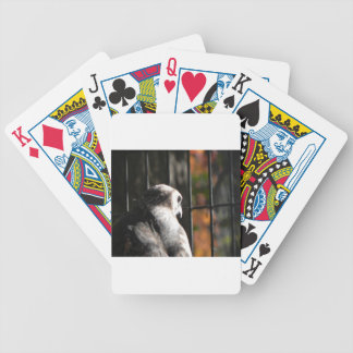 Hawk in a bird sanctuary bicycle playing cards