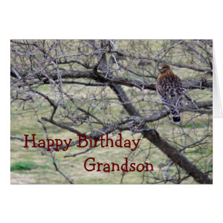 Hawk in tree- customize any occasion card
