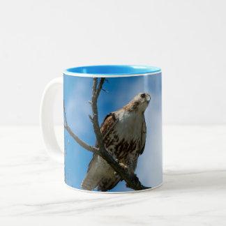 Hawk on the Hunt Blue 11 oz Two-Tone Mug
