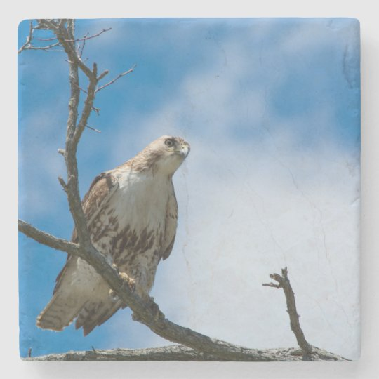 Hawk On The Hunt Marble Stone Coaster