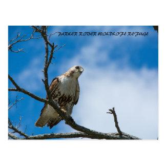 Hawk On The Hunt Postcard