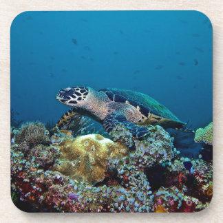 Hawkbill Turtle Coaster