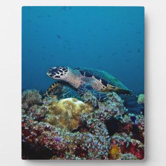 Hawkbill Turtle Plaque