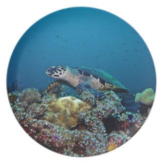 Hawkbill Turtle Plate