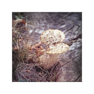 Hawks Wing Mushroom on Ground Canvas Print
