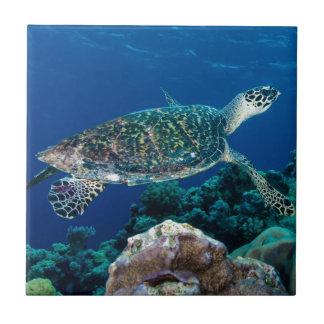 Hawksbill Sea Turtle Great Barrier Reef Coral Sea Tile