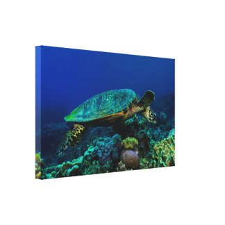Hawksbill Sea Turtle Wrapped Canvas Gallery Wrap Canvas