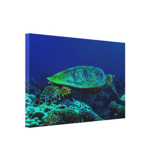Hawksbill Sea Turtle Wrapped Canvas Stretched Canvas Print