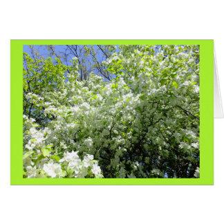 Hawthorn Tree in Flower Blank Note Card