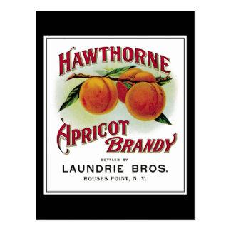 Hawthorne Aprilcot Brandy Postcard