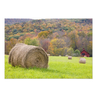Hay bales and fall foliage on farm, photographic print