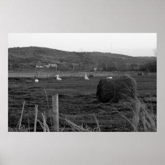 Hay Days Print