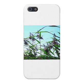 Hay in the summer case for iPhone 5/5S