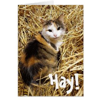 Hay! It's your Bithday Cat Card