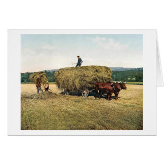 Haying in New England - Vintage 1900 Card