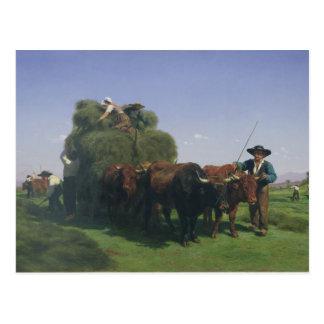 Haymaking, Auvergne Postcard