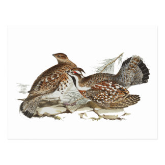 Hazel Grouse Postcard