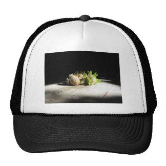 Hazelnuts on the table illuminated by the sunshine trucker hat