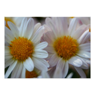 Hazy Day Daisies Poster