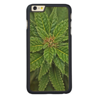 HDR Cannabis Carved® Maple iPhone 6 Plus Case