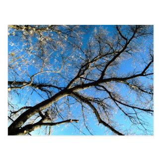 HDR Tree Postcard