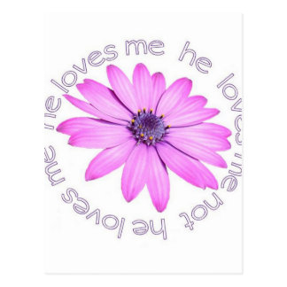 He Loves Me He Loves Me Not Postcard