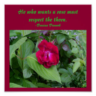 He who wants a rose must respect...Poster Poster