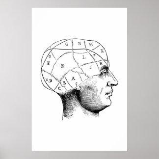 Head Anatomy Illustration Poster