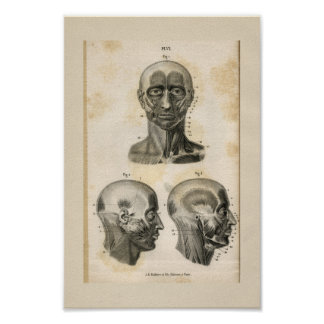 Head Neck Muscles Vintage Anatomy Print