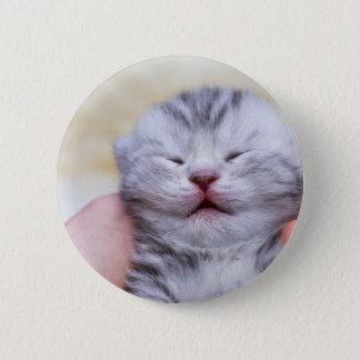 Head newborn silver tabby cat sleeping on hand 2 inch round button