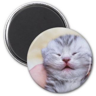 Head newborn silver tabby cat sleeping on hand 2 inch round magnet