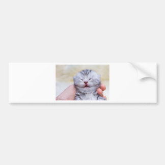 Head newborn silver tabby cat sleeping on hand bumper sticker