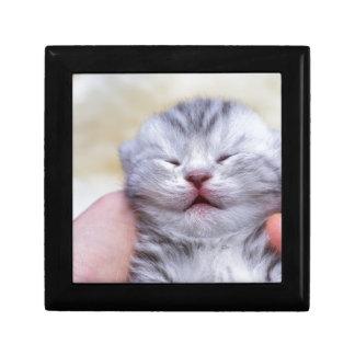 Head newborn silver tabby cat sleeping on hand gift box