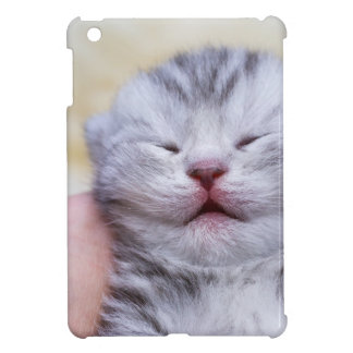 Head newborn silver tabby cat sleeping on hand iPad mini cover