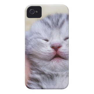 Head newborn silver tabby cat sleeping on hand iPhone 4 case