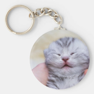 Head newborn silver tabby cat sleeping on hand keychain