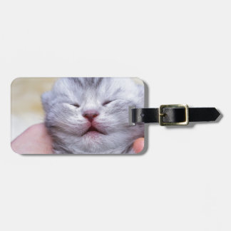 Head newborn silver tabby cat sleeping on hand luggage tag