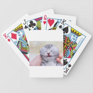 Head newborn silver tabby cat sleeping on hand poker deck