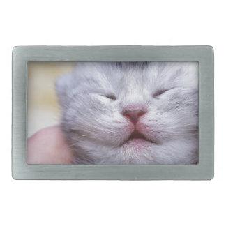 Head newborn silver tabby cat sleeping on hand rectangular belt buckles