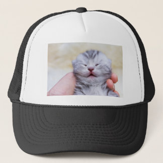 Head newborn silver tabby cat sleeping on hand trucker hat