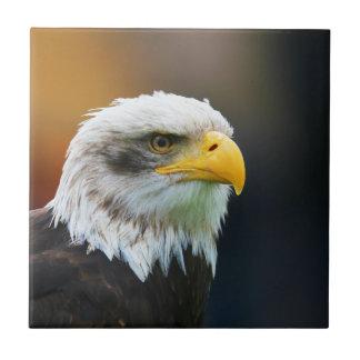 Head of a Bald Eagle Haliaeetus Leucocephalus Tile