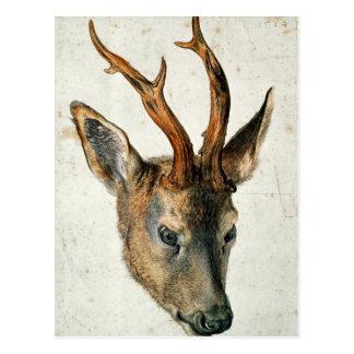 Head of a Roe Deer Postcard