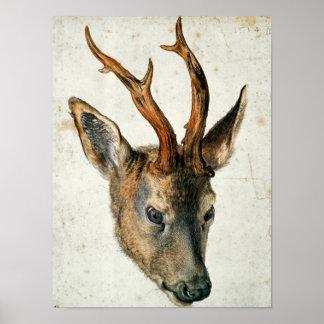 Head of a Roe Deer Poster