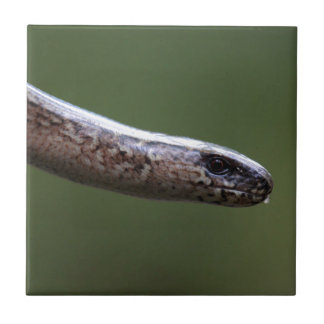 Head of a Slowworm,  Anguis fragilis Tiles