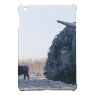 Head of black bull scottish highlander with cow iPad mini cases