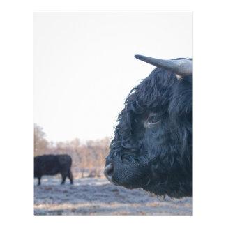 Head of black bull scottish highlander with cow letterhead design