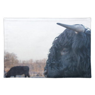 Head of black bull scottish highlander with cow placemat