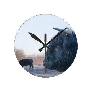 Head of black bull scottish highlander with cow round clock